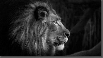 lionking_arc