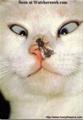 Homqua_emmo_gapBacHo