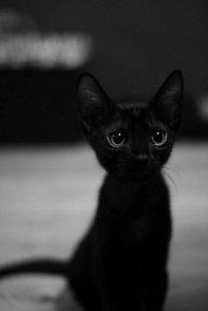 Black_Cat_0211