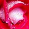 camellia0906