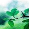 rhythm_and_rain