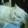 chubbycat1987