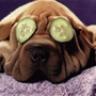 PuppyLove_84