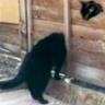 Bad_Cat