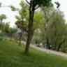 dongocanh