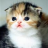 virgo_kitten