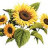 sunflower_92